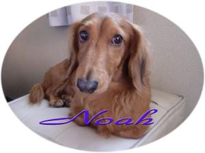 Noah_s