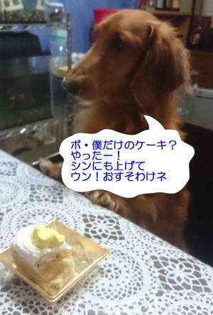 Noah_3